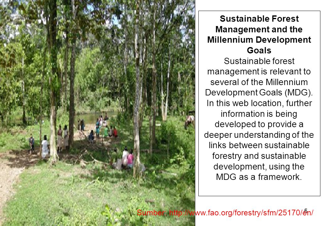 Sustainable Forest Management and the Millennium Development Goals