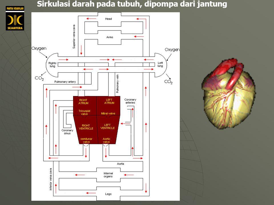 Sirkulasi darah pada tubuh, dipompa dari jantung