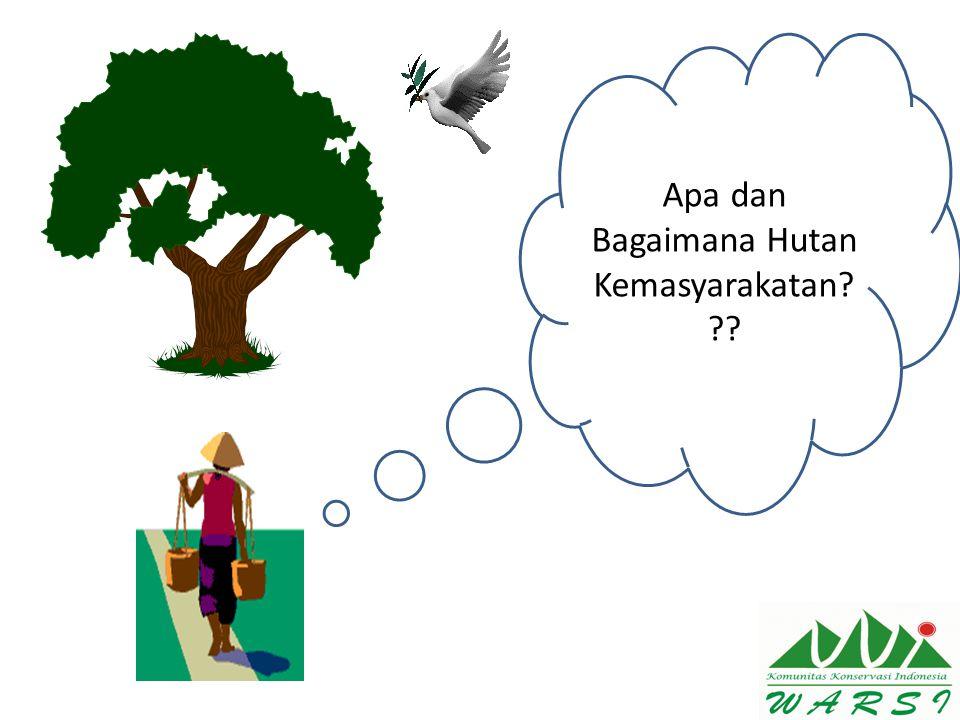 Apa dan Bagaimana Hutan Kemasyarakatan