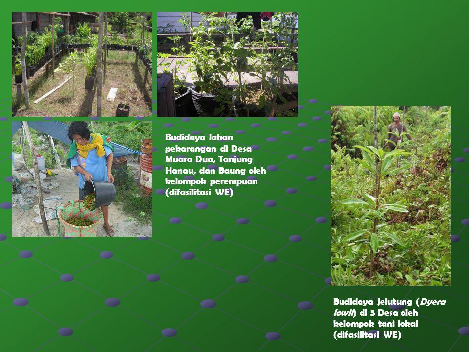 Budidaya lahan pekarangan di Desa Muara Dua, Tanjung Hanau, dan Baung oleh kelompok perempuan (difasilitasi WE)