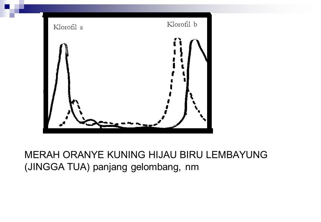 Klorofil a Klorofil b MERAH ORANYE KUNING HIJAU BIRU LEMBAYUNG (JINGGA TUA) panjang gelombang, nm