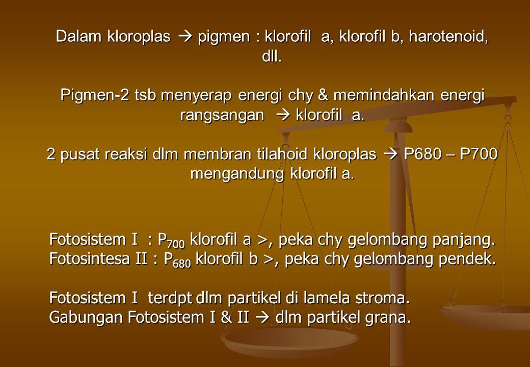 Dalam kloroplas  pigmen : klorofil a, klorofil b, harotenoid, dll