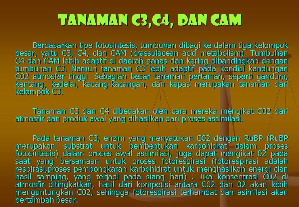 Tanaman C3,C4, dan CAM