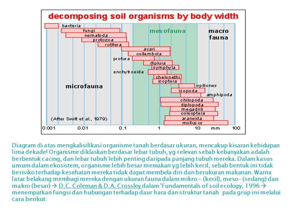 Diagram di atas mengkalisifikasi organisme tanah berdasar ukuran, mencakup kisaran kehidupan lima dekade.