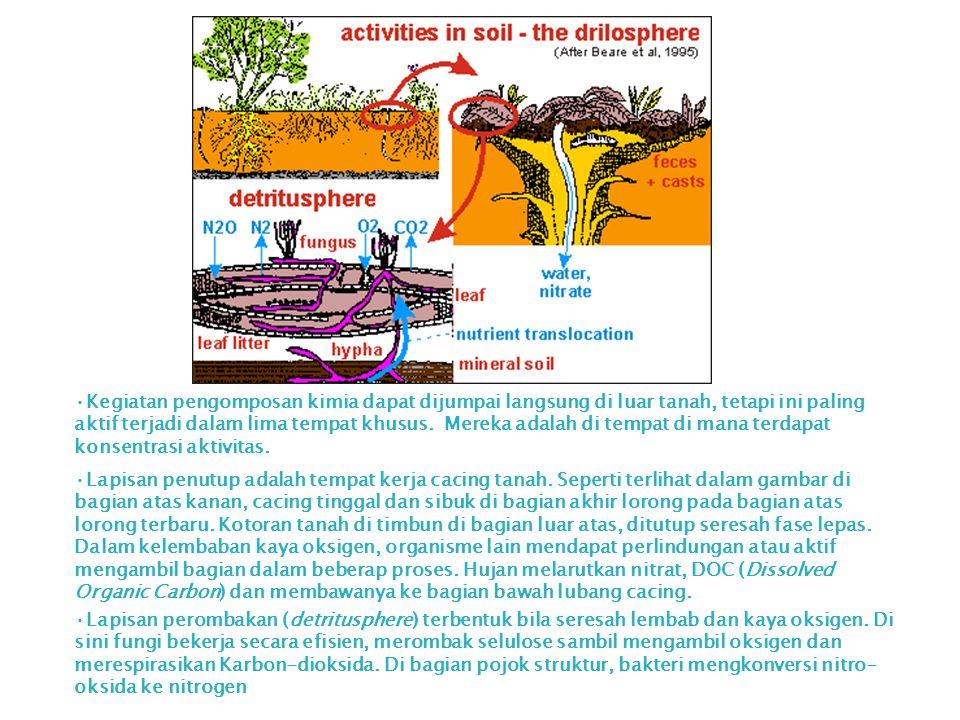 Kegiatan pengomposan kimia dapat dijumpai langsung di luar tanah, tetapi ini paling aktif terjadi dalam lima tempat khusus. Mereka adalah di tempat di mana terdapat konsentrasi aktivitas.