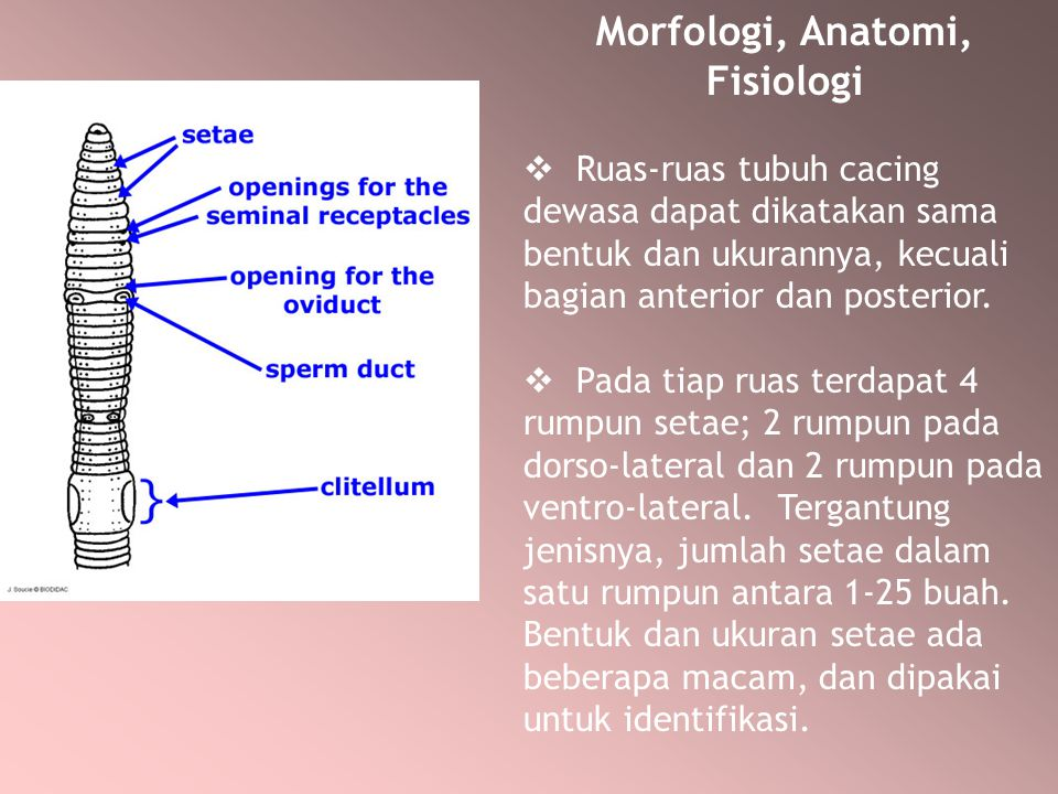 Morfologi, Anatomi, Fisiologi