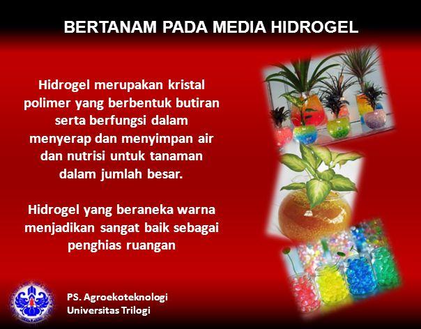 BERTANAM PADA MEDIA HIDROGEL