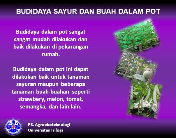 BUDIDAYA SAYUR DAN BUAH DALAM POT