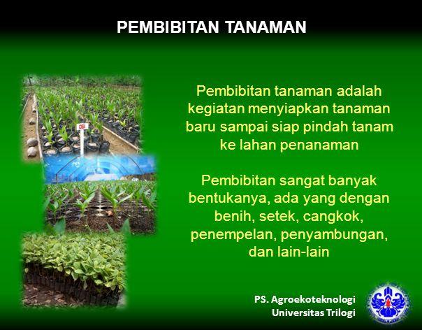 PEMBIBITAN TANAMAN Pembibitan tanaman adalah kegiatan menyiapkan tanaman baru sampai siap pindah tanam ke lahan penanaman.