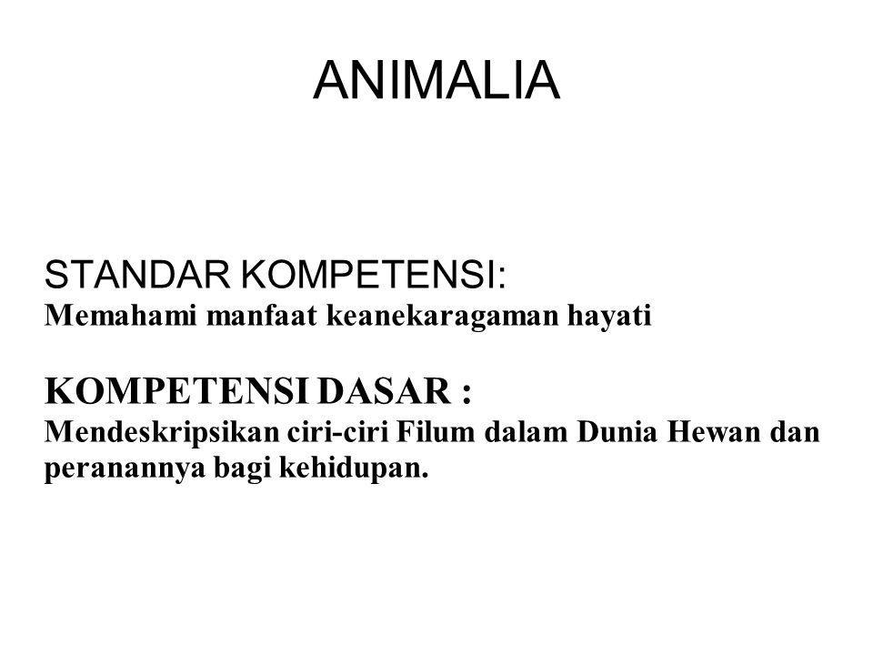 ANIMALIA STANDAR KOMPETENSI: KOMPETENSI DASAR :