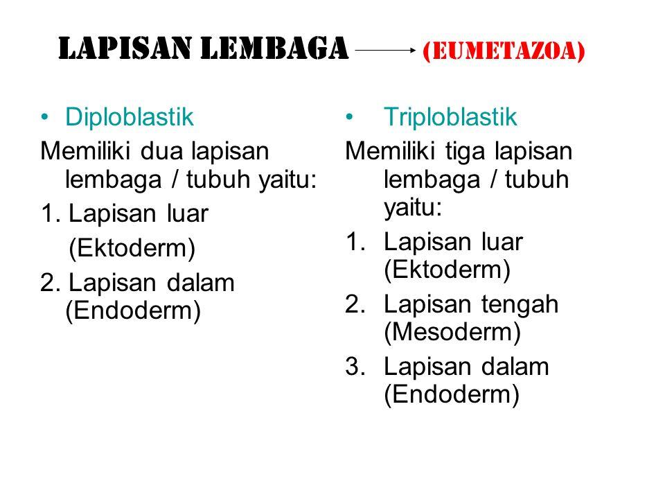 LAPISAN LEMBAGA (Eumetazoa)