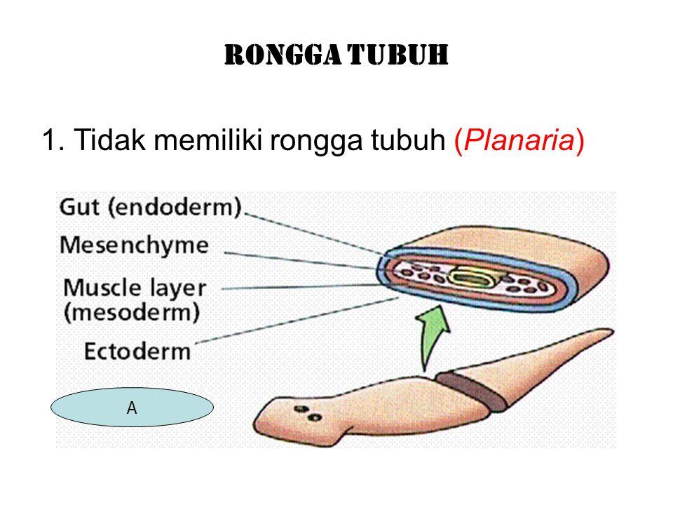 1. Tidak memiliki rongga tubuh (Planaria)