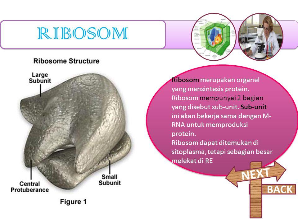 RIBOSOM NEXT BACK Ribosom merupakan organel yang mensintesis protein.