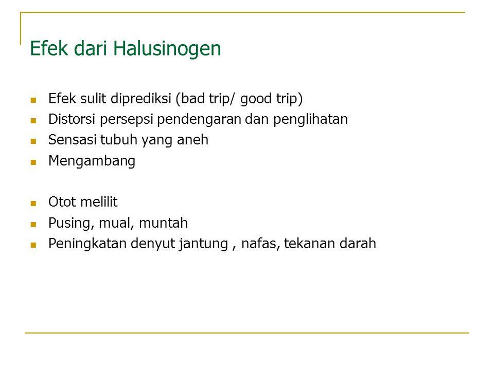 Efek dari Halusinogen Efek sulit diprediksi (bad trip/ good trip)