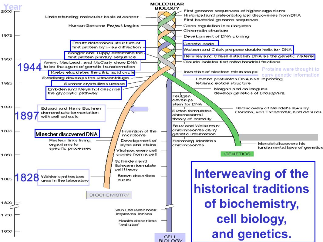 historical traditions of biochemistry, cell biology, and genetics.