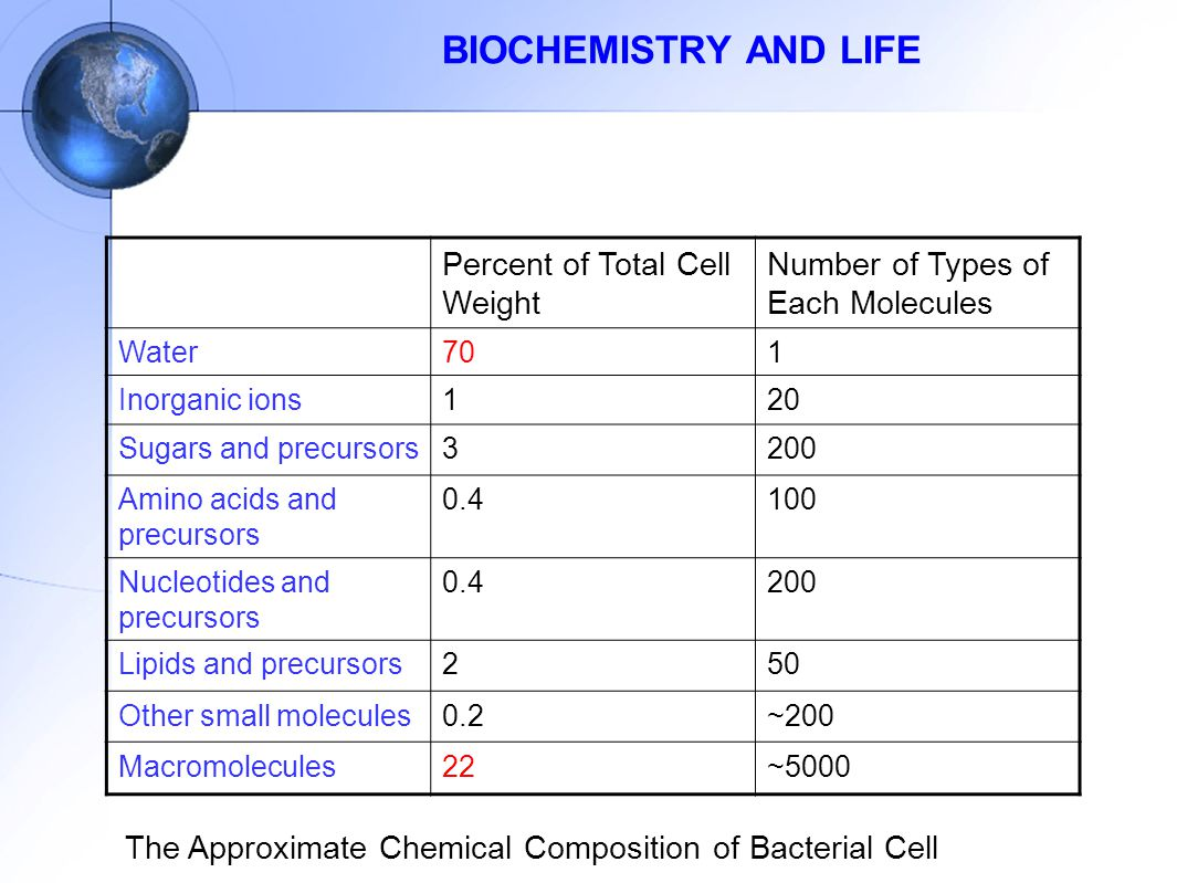 BIOCHEMISTRY AND LIFE Percent of Total Cell Weight