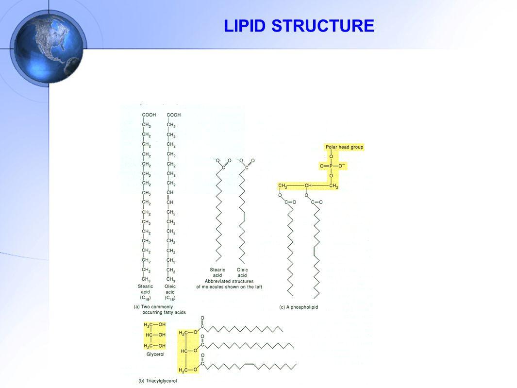 LIPID STRUCTURE