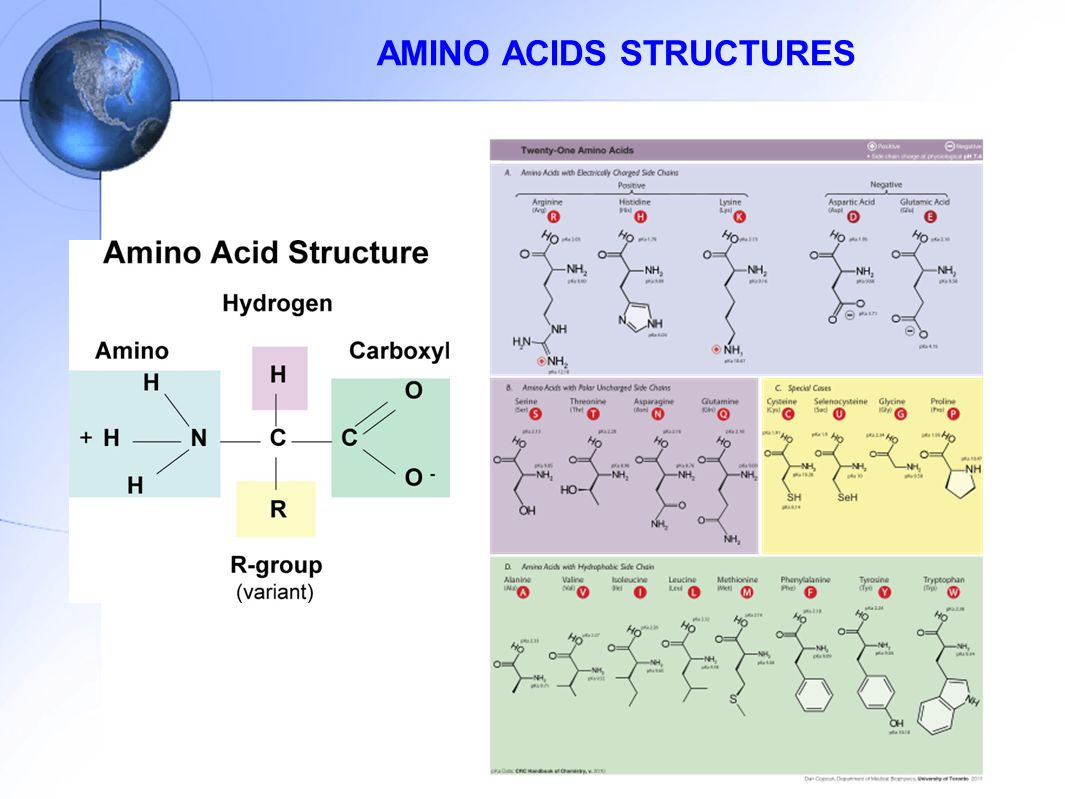 AMINO ACIDS STRUCTURES