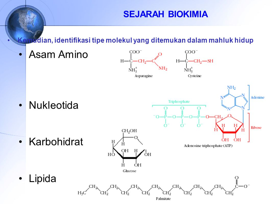 Asam Amino Nukleotida Karbohidrat Lipida SEJARAH BIOKIMIA