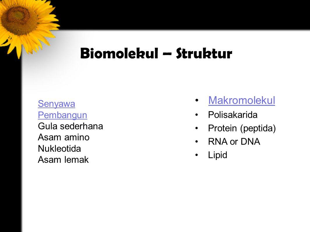 Biomolekul – Struktur Makromolekul Polisakarida Protein (peptida)