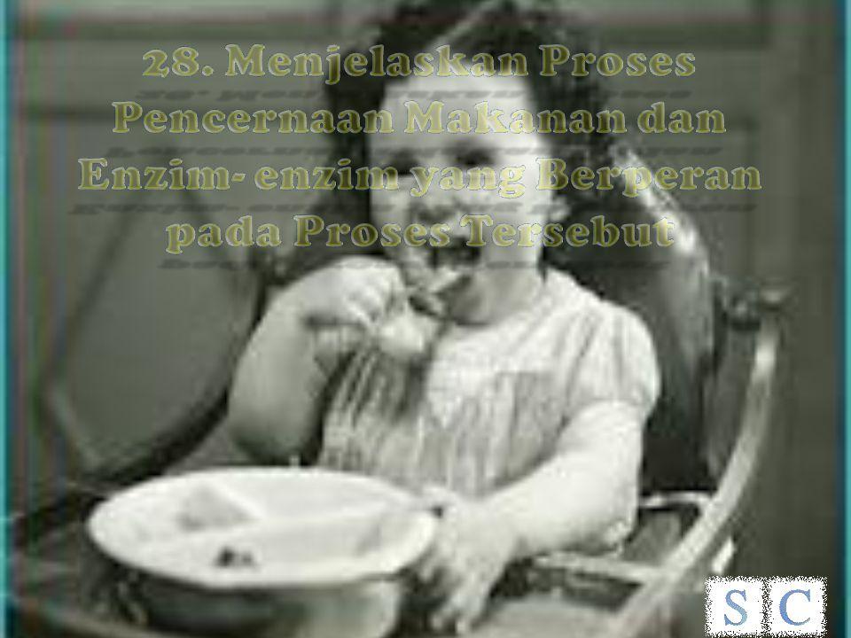 28. Menjelaskan Proses Pencernaan Makanan dan Enzim- enzim yang Berperan pada Proses Tersebut