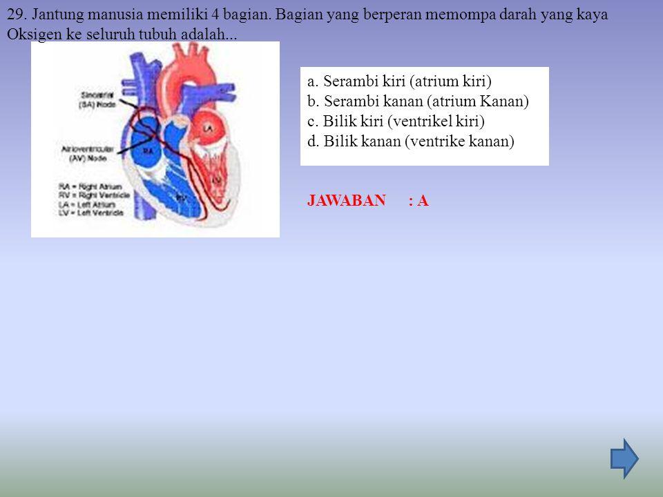 29. Jantung manusia memiliki 4 bagian
