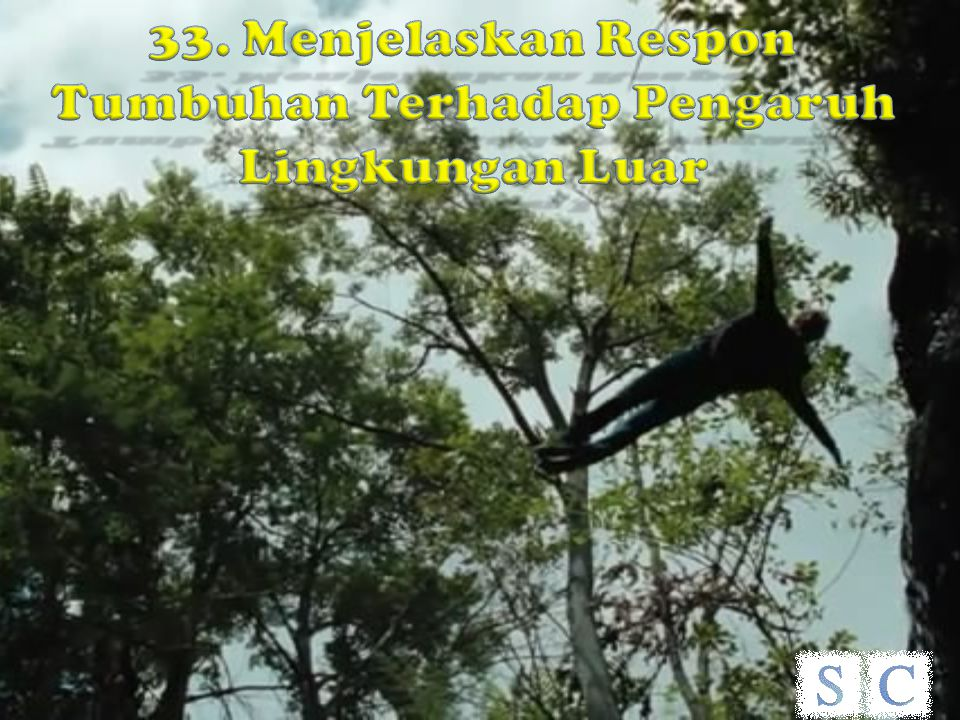 33. Menjelaskan Respon Tumbuhan Terhadap Pengaruh Lingkungan Luar