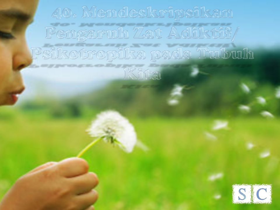 40. Mendeskripsikan Pengaruh Zat Adiktif/ Psikotropika pada Tubuh Kita
