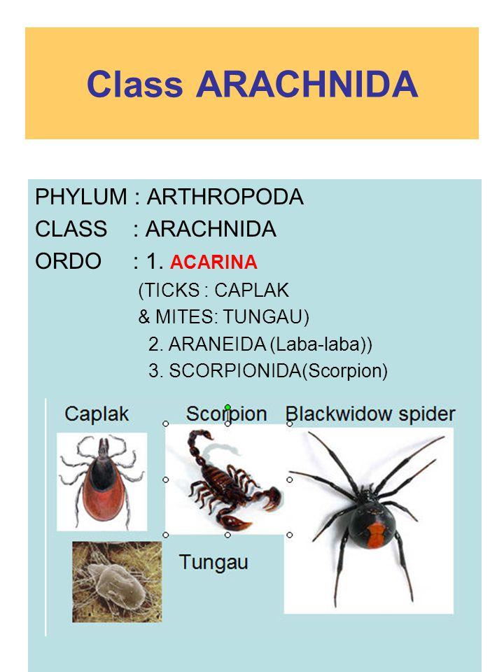 Class ARACHNIDA PHYLUM : ARTHROPODA CLASS : ARACHNIDA