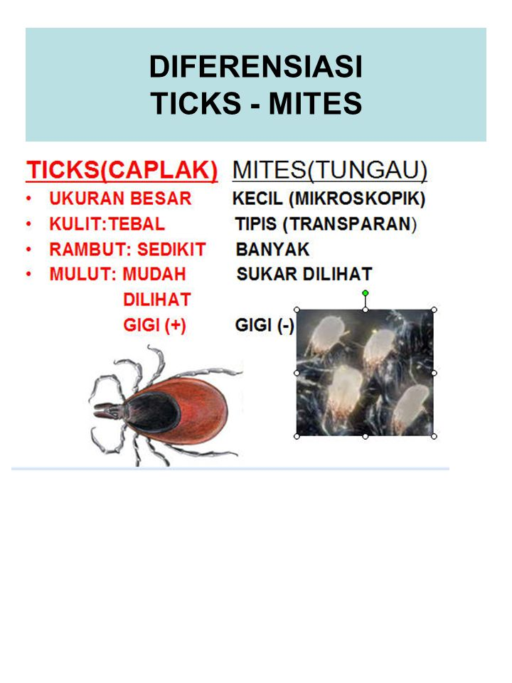 DIFERENSIASI TICKS - MITES