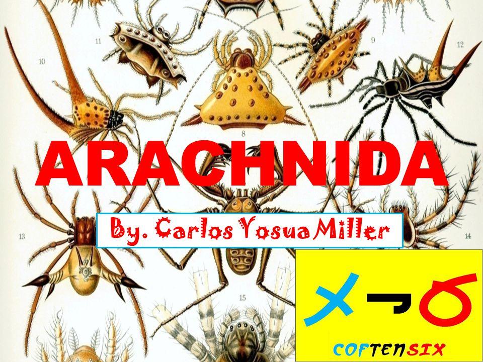 ARACHNIDA By. Carlos Yosua Miller