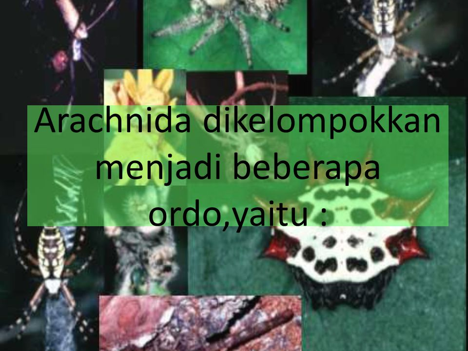 Arachnida dikelompokkan menjadi beberapa ordo,yaitu :
