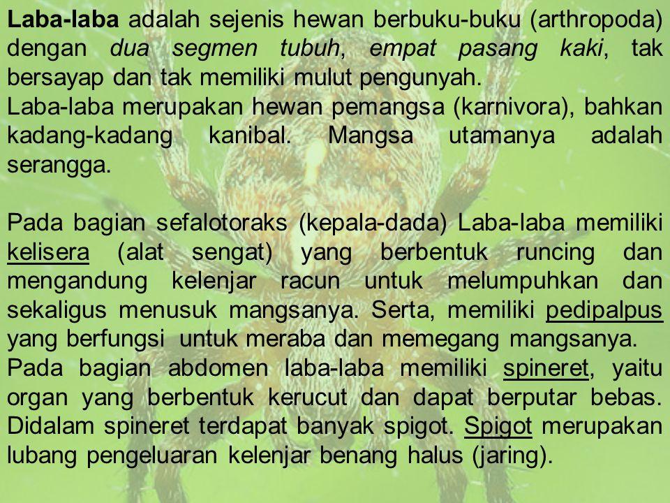 Laba-laba adalah sejenis hewan berbuku-buku (arthropoda) dengan dua segmen tubuh, empat pasang kaki, tak bersayap dan tak memiliki mulut pengunyah.