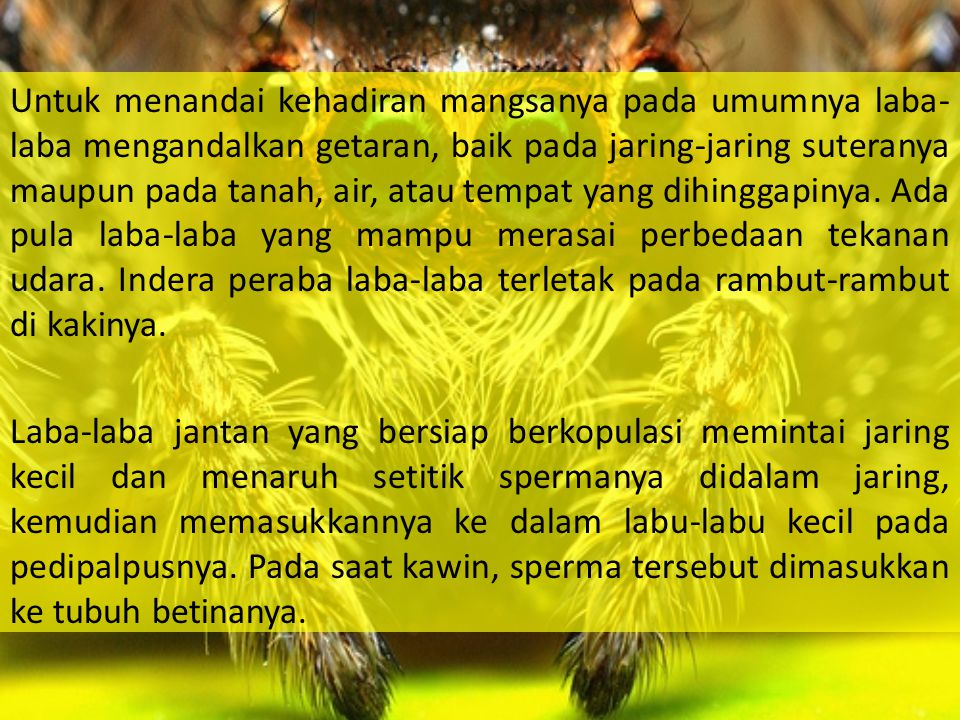 Untuk menandai kehadiran mangsanya pada umumnya laba-laba mengandalkan getaran, baik pada jaring-jaring suteranya maupun pada tanah, air, atau tempat yang dihinggapinya.