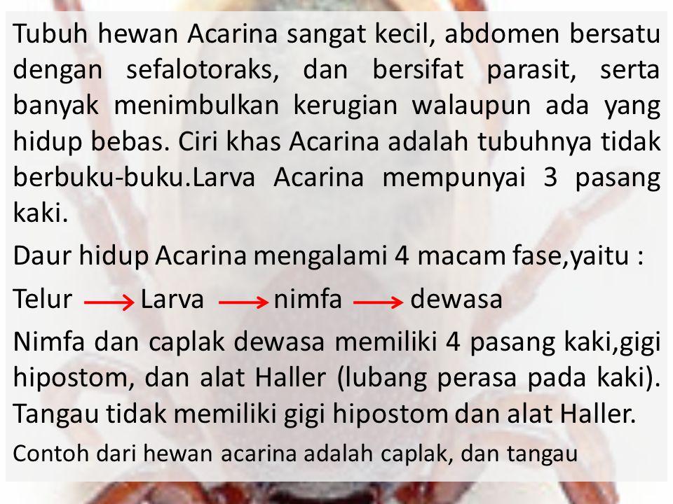 Daur hidup Acarina mengalami 4 macam fase,yaitu :