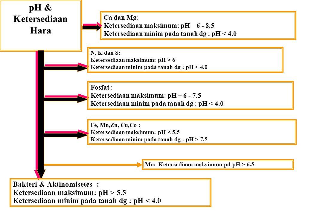 pH & Ketersediaan Hara Bakteri & Aktinomisetes :