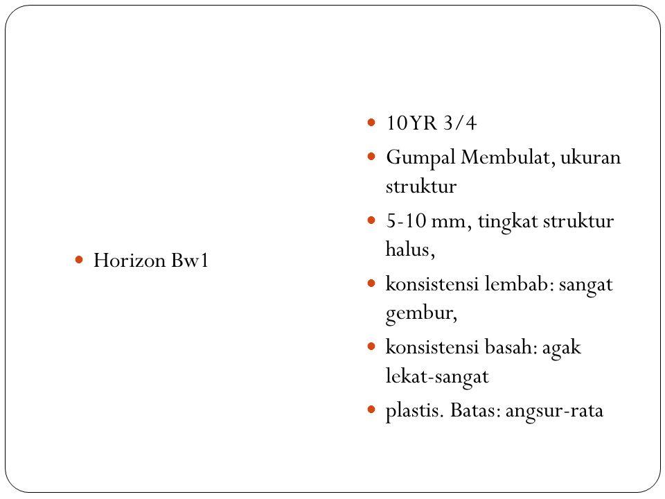 Horizon Bw1 10 YR 3/4. Gumpal Membulat, ukuran struktur. 5-10 mm, tingkat struktur halus, konsistensi lembab: sangat gembur,