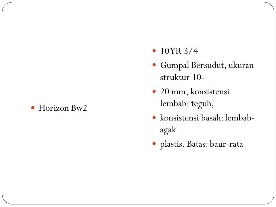 Horizon Bw2 10 YR 3/4. Gumpal Bersudut, ukuran struktur 10- 20 mm, konsistensi lembab: teguh, konsistensi basah: lembab- agak.