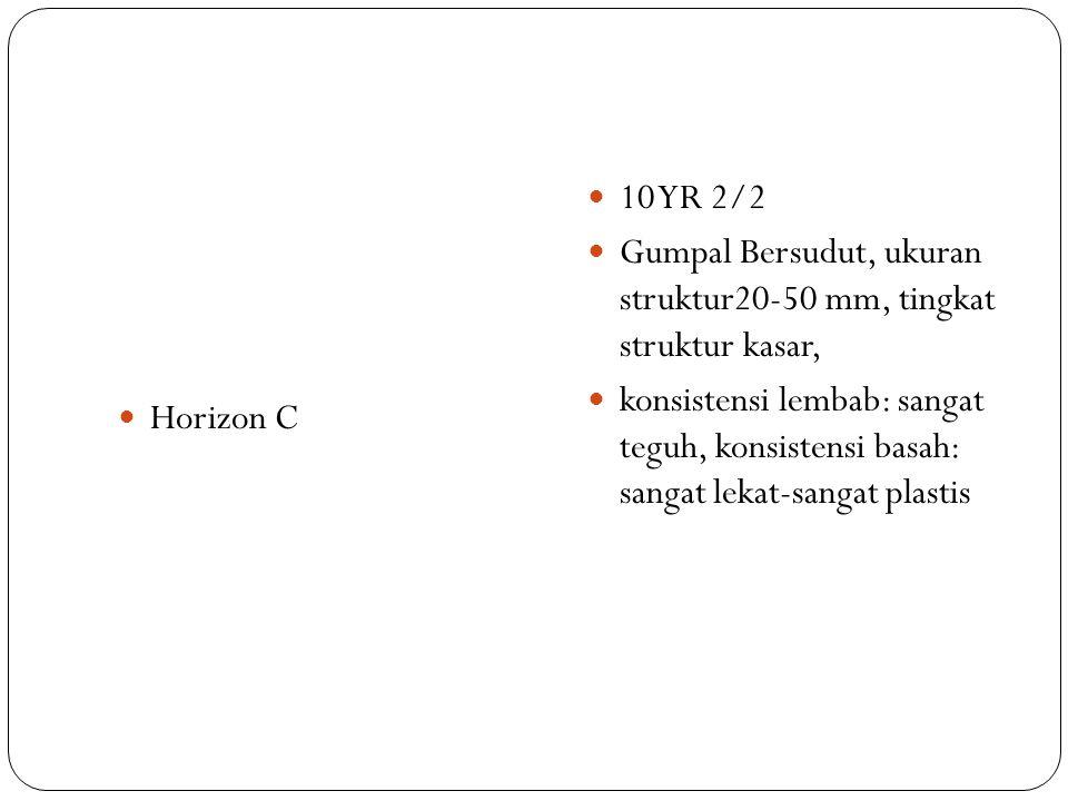 Horizon C 10 YR 2/2. Gumpal Bersudut, ukuran struktur20-50 mm, tingkat struktur kasar,