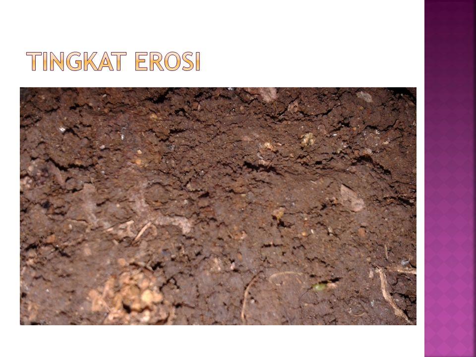 Tingkat Erosi Pada sub titik 3 terjadi erosi percik dan juga alur dengan tingkat konsentrasi rendah.