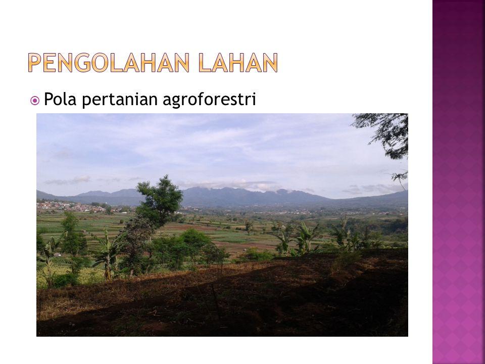 Pengolahan Lahan Pola pertanian agroforestri