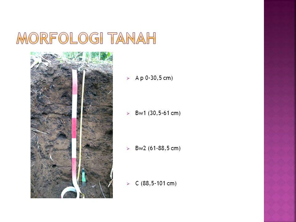 Morfologi Tanah A p 0-30,5 cm) Bw1 (30,5-61 cm) Bw2 (61-88,5 cm)