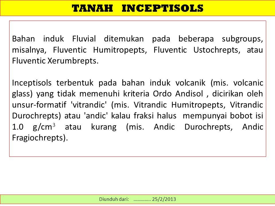 TANAH INCEPTISOLS