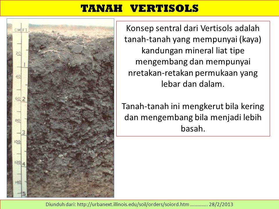 TANAH VERTISOLS