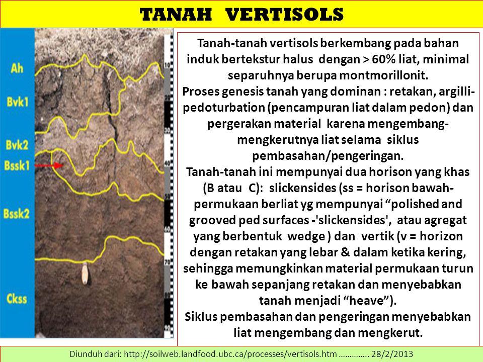 TANAH VERTISOLS Tanah-tanah vertisols berkembang pada bahan induk bertekstur halus dengan > 60% liat, minimal separuhnya berupa montmorillonit.