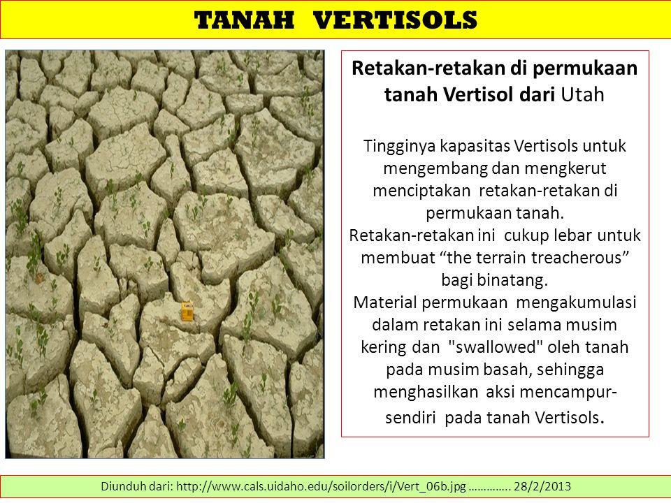 Retakan-retakan di permukaan tanah Vertisol dari Utah