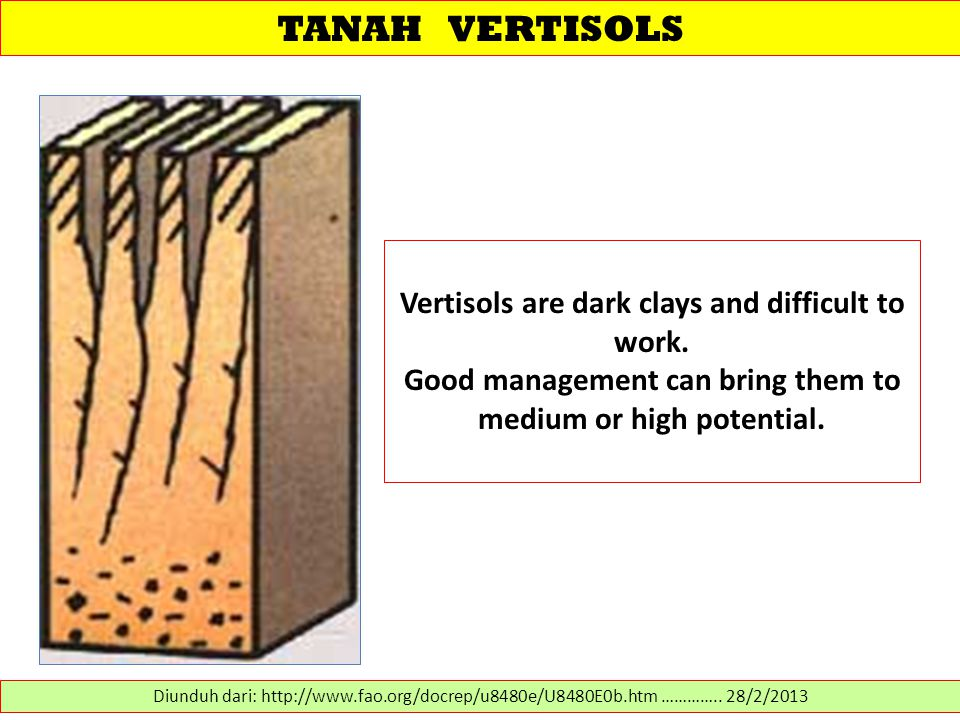 TANAH VERTISOLS Vertisols are dark clays and difficult to work.