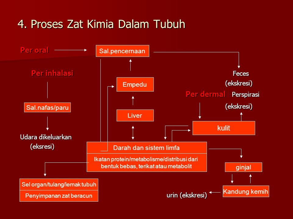 4. Proses Zat Kimia Dalam Tubuh