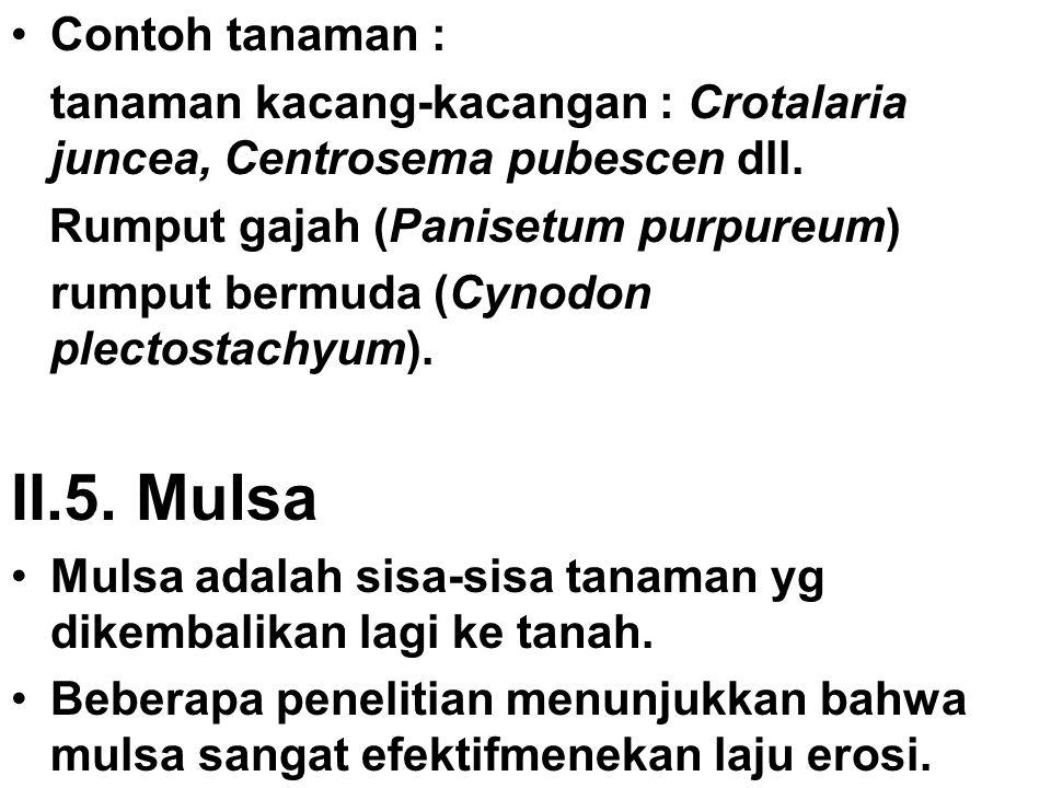 II.5. Mulsa Contoh tanaman :