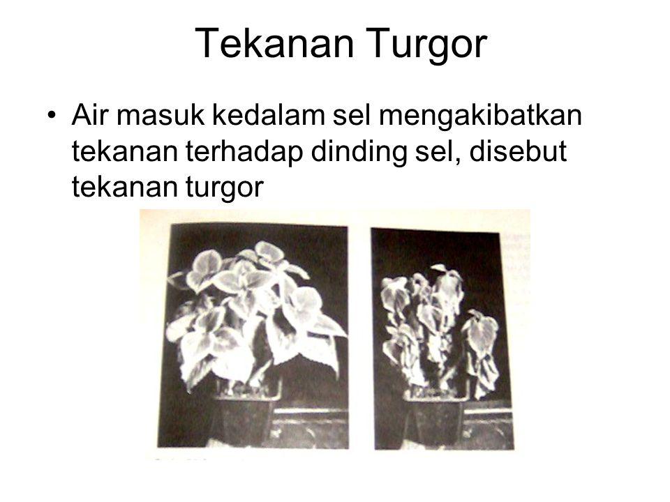 Tekanan Turgor Air masuk kedalam sel mengakibatkan tekanan terhadap dinding sel, disebut tekanan turgor.